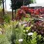 Much more garden