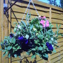 Hanging_basket_2