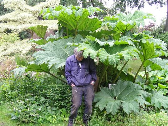 gunara at the vicaridge gardens