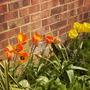 Tulipsgaragebedvistabile15.04.08