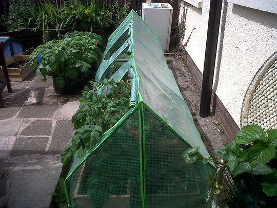 cloche greenhouse