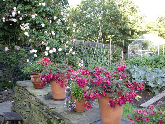 Decided to go with dark pink pots for the veg garden this year.