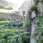 View from veg garden up to the house and new terrace!