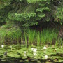swamp vegetation