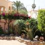 Various mediterranean plants 1