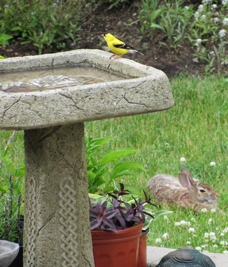 Just now in my garden.