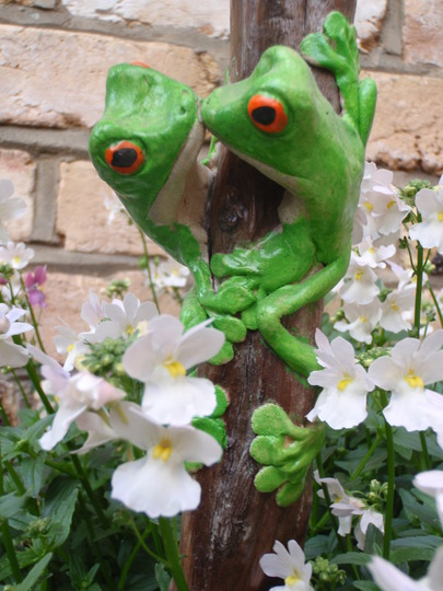 My frogs