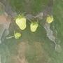 Phoenix_pk_and_garden_jusne_2008_058