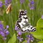 Bill_butterflies_024