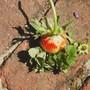 Strange strawberry
