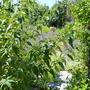 Porsche_reid_garden_june._013
