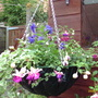 My first ever hanging basket