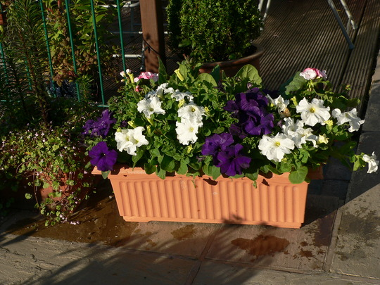 this planter cost me £2 .25 to make with plants from aldi
