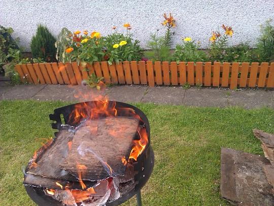 fire  (Allium lilacinum)