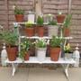 Plant Terrace