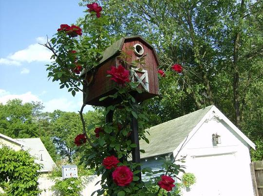 Red Blaze climbing on the birdhouse pole.