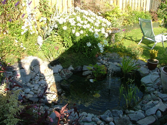 pond a year on
