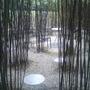 Black Bamboo maze.