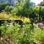 July - garden