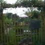 View of my garden