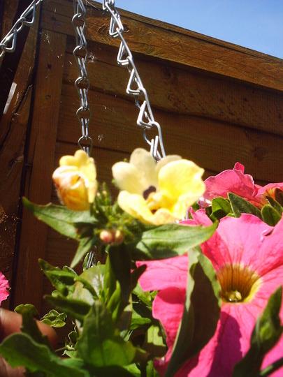 hanging_basket.jpg