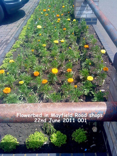 Flowerbed in Mayfield Road shops 22-06-2011 001