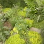 Herb Garden Patchwork Path