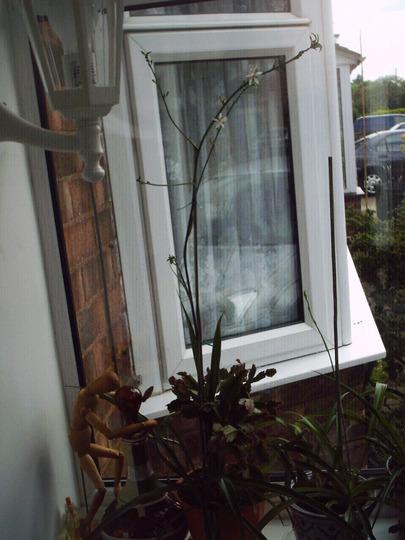 house_plant_long_flowering_stem.jpg