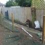 dog run extension