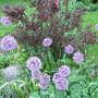 06_04_2011_june_blooms_037