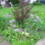 06_04_2011_june_blooms_038