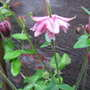 06_04_2011_june_blooms_042