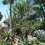 Cactai Garden