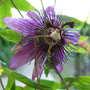 06_04_2011_june_blooms_059