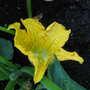 06_04_2011_june_blooms_087