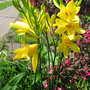 06_04_2011_june_blooms_093