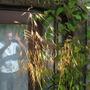 06july2011_015