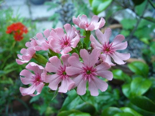 Pink flower!