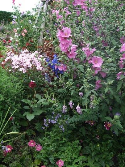 Side garden flowers.