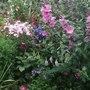 Side_garden_flowers