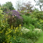 One of the abundant borders in the back garden