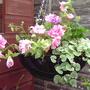 pretty pink hanging basket