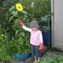 Granddaughters Sunflower