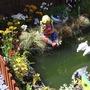 fish pond in back garden,