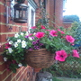 My Hanging Basket... mid July