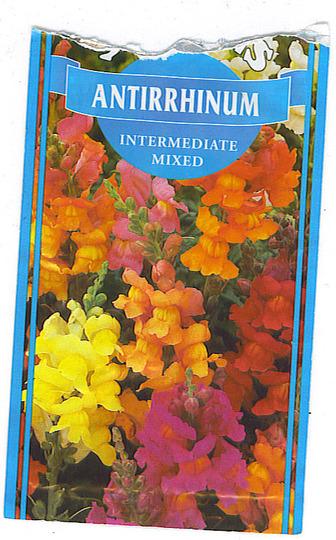 Antirrhinum HHA sown 13 7 2011 (Antirrhum)