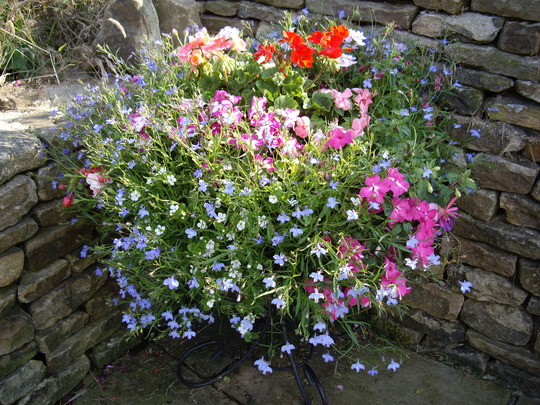 One of the big baskets on the terrace.