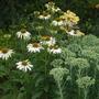 Garden_14th_july_2011_011