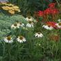 Garden_14th_july_2011_010