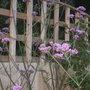 Garden_14th_july_2011_020